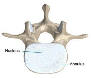 Anatomie tussenwervelschijf