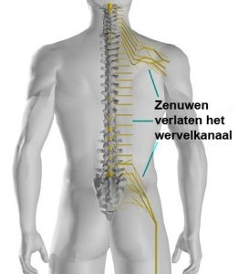 artrose lage rug